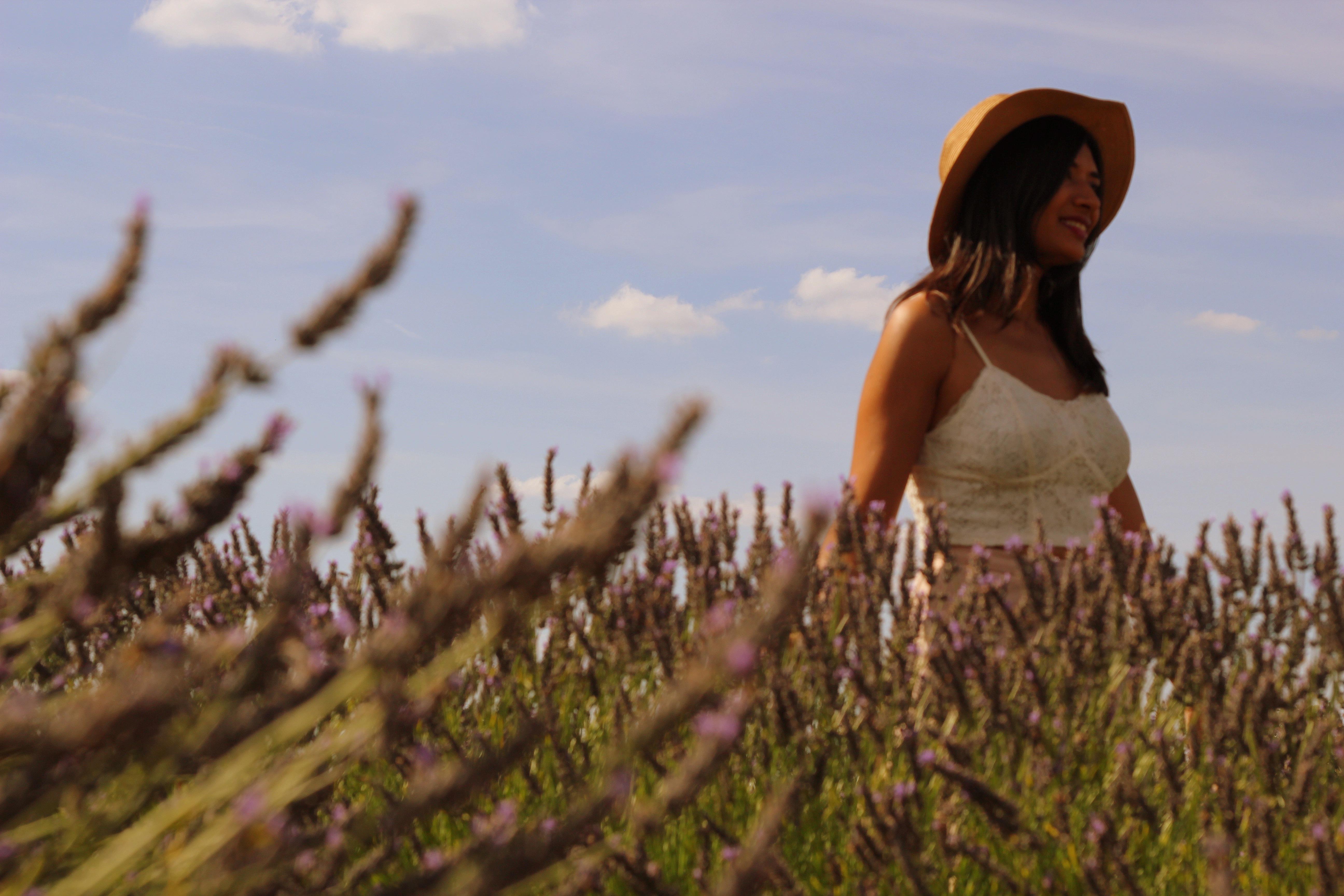 Lavender-008