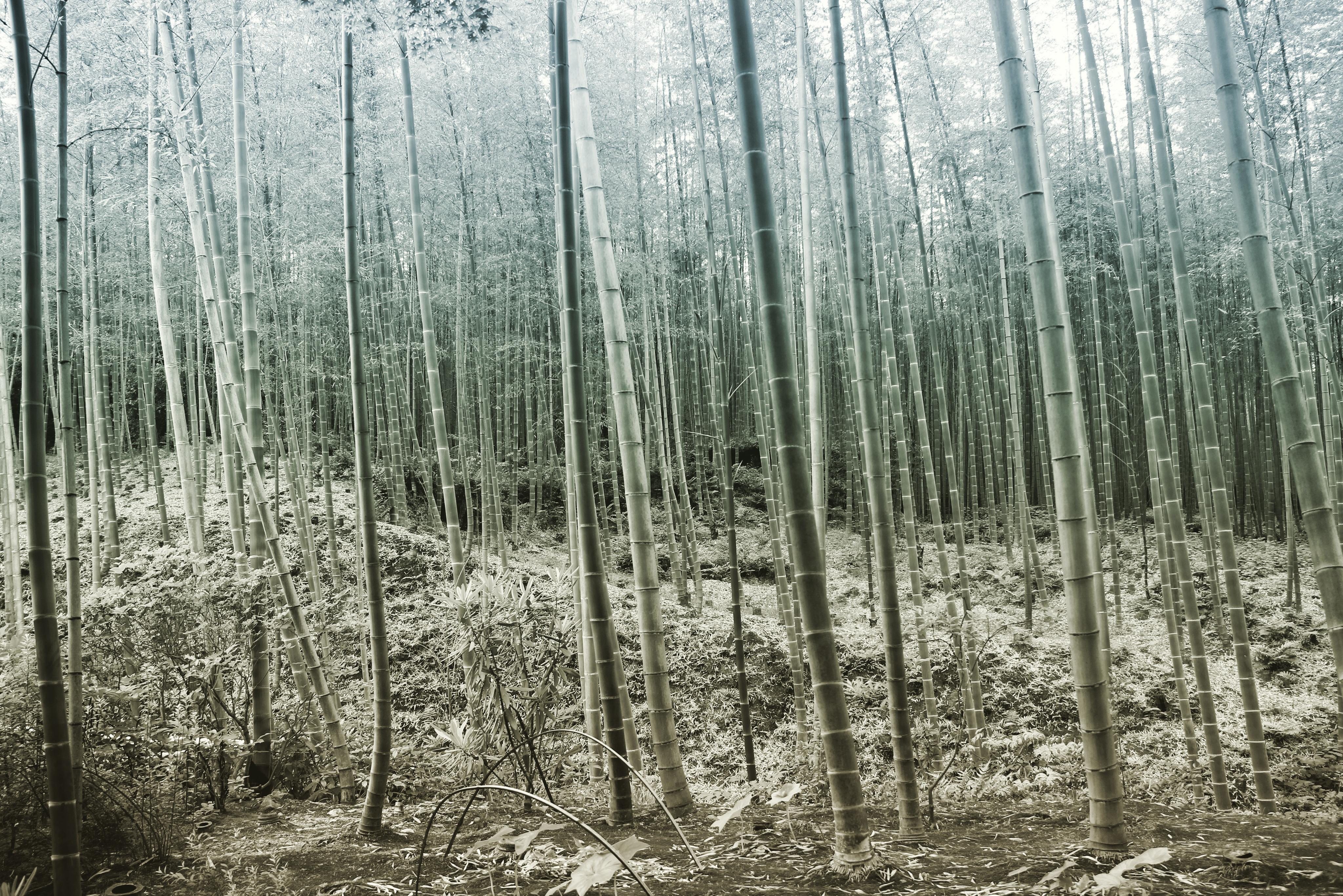 Blog-Kyoto-003