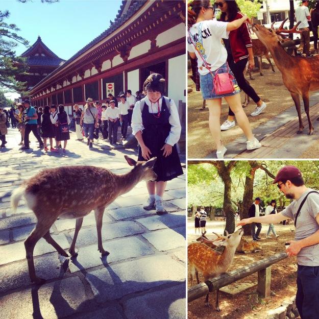 Blog-Nara-004