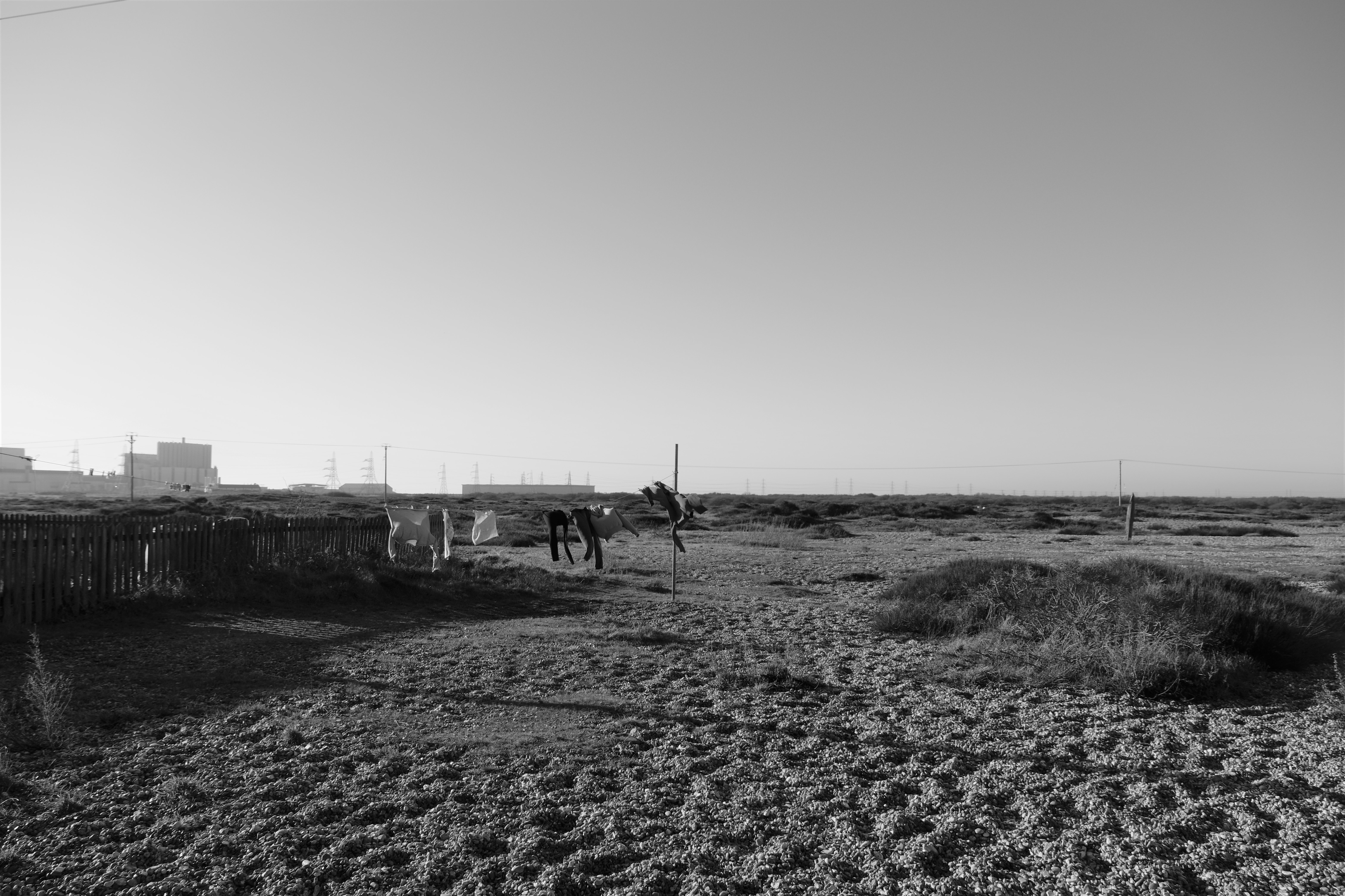 Dungeness0113