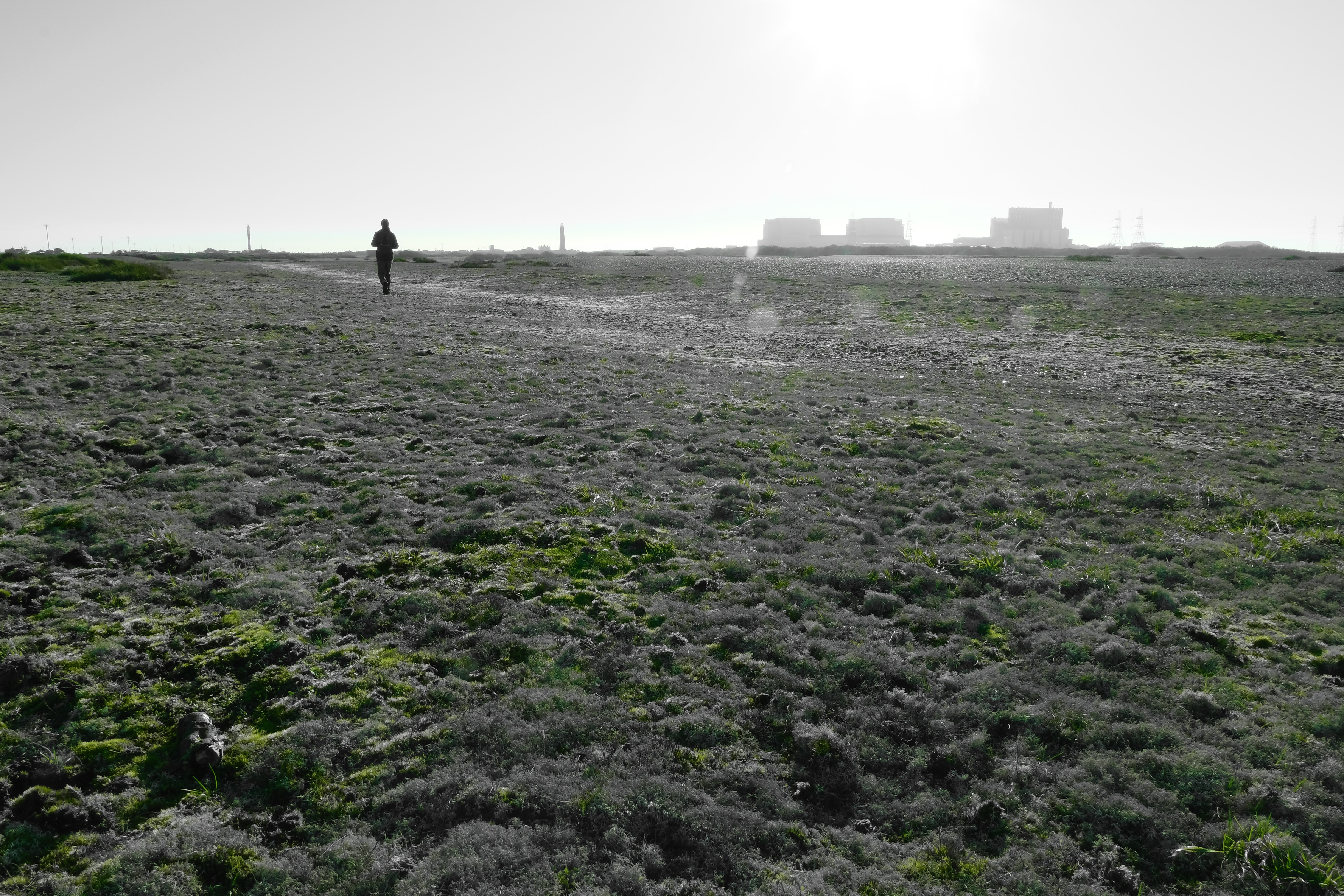 Dungeness0134