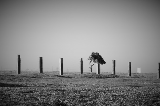 Dungeness0153